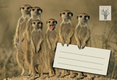 Meerkats / Post voor jou