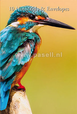 Kingfisher notecards
